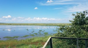 Take A Short Hike To A Stunning Overlook At Bombay Hook National Wildlife Refuge In Delaware