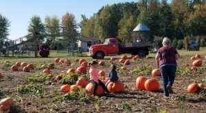 Nothing Says Fall Is Here More Than A Visit To Johnson's Giant Pumpkin Farm In Michigan