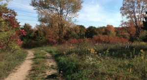 Surround Yourself With Fall Foliage On Chipman Preserve Trail, An Easy 3-Mile Hike In Michigan