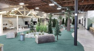 Visit Woodland Kids, The Forest-Themed Indoor Playground In Idaho That's Insanely Fun