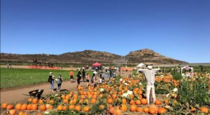 Nothing Says Fall Is Here More Than A Visit To Southern California's Charming Pumpkin Farm