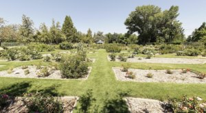 Stroll Through More Than 1,750 Roses During A Visit To Municipal Rose Garden In Nevada