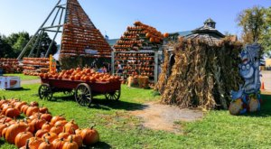 The Massive Pumpkin Pyramid At The Great Pumpkin Farm Near Buffalo Is A Sight To Be Seen