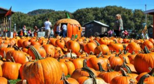 You Could Spend Hours In The 200-Acre Pumpkin Patch At Pumpkinville Near Buffalo