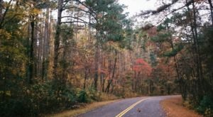 Atlanta State Park Is One Of The Most Underrated Places To See Fall Foliage In Texas