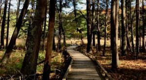 The Peverly Pond Loop Is An Easy And Beautiful Fall Hike In New Hampshire