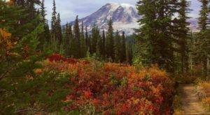 Pinnacle Peak Will Take You To The Most Spectacular Fall Foliage In Washington