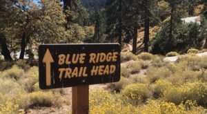 The 4-Mile Blue Ridge Trail In Southern California Takes You Through The Enchanting Angeles National Forest