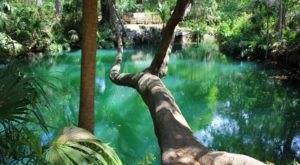 The Emerald-Colored Springs At Green Springs Park In Florida Are A Natural Wonder