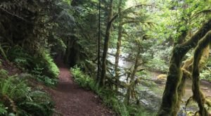 Take The Old Salmon River Trail In Oregon For A Shady Stroll