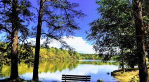 This Peaceful Hike Takes You To Ed Lisenby Lake In Alabama