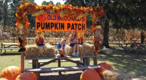 Old Macdonald's Farm In Texas Has A Fall Festival That's Fun For The Whole Family