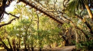 The Longest Elevated Canopy Walk In Florida Can Be Found At Myakka State Park