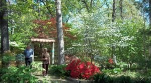 Meander Through 1,200 Different Types Of Plants At Lendonwood Gardens In Oklahoma