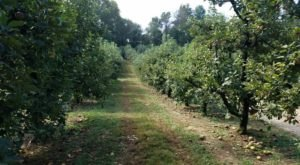 Georgia's Hillcrest Orchards Has Hayrides, A Corn Maze, And U-Pick Apples Galore