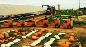 Choose From Over 80-Acres Of Pumpkins At The Charming Jaemor Farms In Georgia