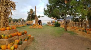 Pick Pumpkins, Go On A Hay Ride, And Pet Farm Animals At Mother Nature's Farm In Arizona