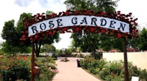 Stroll Through More Than 9,000 Rose Bushes During A Visit To The Rose Garden At Mesa Community College In Arizona