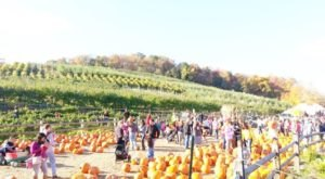 Win One Of The Thousands Of Free Pumpkins At Silverman Farm's Fall Fest In Connecticut