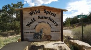 Not Many People Know About This Wolf Sanctuary Right Here In New Mexico