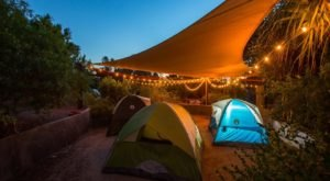 Spend The Night At The Phoenix Zoo In Arizona For An Evening Of Wild Fun