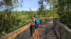 6 Of The Greatest Swamp Hiking Trails Near New Orleans For Beginners