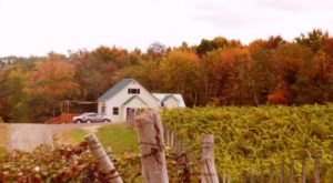 Take This Road Trip To Experience Some Of The Best Fall Foliage And Wineries In Ohio
