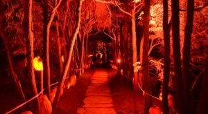 Stand Among 5,000 Hand-Carved Illuminated Jack O'Lanterns At New York's Old Westbury Gardens