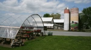 You'll Find Delicious Ice Cream, Amish Goods, And Fresh Produce At Barn-N-Bunk Farm Market In Ohio