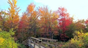 Reinstein Woods Is The Most Peaceful Place To Experience Fall Foliage In Buffalo