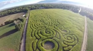 Get Lost In The Maize Maze, An 8-Acre Corn Maze In New Mexico, This Autumn