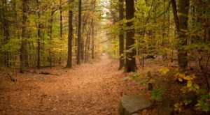 Buck Hill Trail In Massachusetts Offers The Best Views All Year, Especially In The Fall