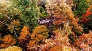 The Canopy Walkway At Bernheim Arboretum Near Cincinnati Takes You High Above The Trees