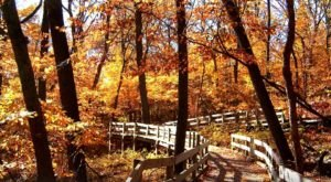 Fontenelle Forest Is The Most Peaceful Place To Experience Fall Foliage In Nebraska