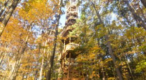 6 Towers In Ohio To Climb This Autumn For Some Beautiful Fall Foliage Views