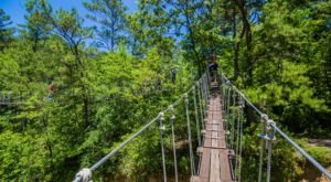 Tackle Tree Walks, Canopy Trails, And Other Feats Deep In A North Carolina Forest At ZipQuest