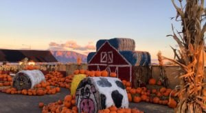These 8 Charming Pumpkin Patches In New Mexico Are Picture Perfect For A Fall Day