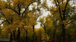 Enjoy Fall Foliage While Strolling Through Gorgeous Luminaries At Turtle River State Park In North Dakota