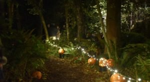 The Bainbridge Gardens Pumpkin Walk In Washington Is A Classic Fall Tradition