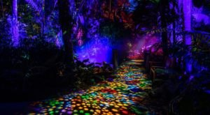 The NightGarden In Florida Is A Magical Wintertime Fairyland Experience