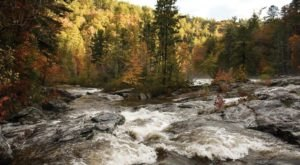 Take A Canopy Tour At Wildwater To See The Stunning Fall Colors In Tennessee