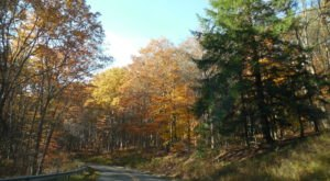 Take A 2-Hour Drive Through Pennsylvania To See This Year's Beautiful Fall Colors
