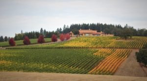 Road Trip To Up To 15 Different Vineyards On Oregon's NW Wine Shuttle