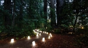 The Candlelight Walk Through Prairie Creek Redwoods State Park In Northern California Is Positively Magical