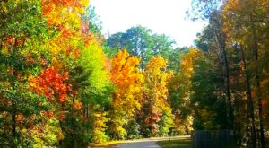 Experience The Fall Colors Like Never Before With A Stay At Jimmie Davis State Park In Louisiana