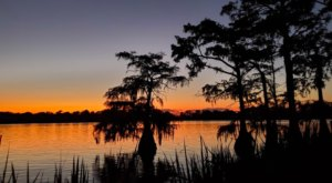 Sleep Under The Stars At One Of The Most Peaceful State Parks In Louisiana