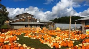 Smash Pumpkins, Sip Wine, And Visit With Animals At Pond Hill Farm In Michigan