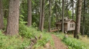 Nature Surrounds You When You Stay At Deer Haven, A Beautiful Treehouse In Oregon