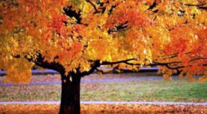 Pittsburgh Botanic Garden Is The Most Peaceful Place To Experience Fall Foliage In Pittsburgh