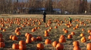The Reindeer Farm Pumpkin Patch In Alaska Is A Classic Fall Tradition